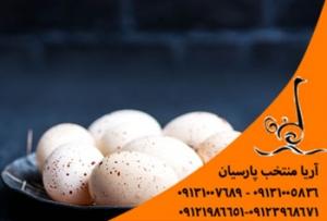 خرید تخم اردک عمده قیمت