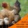 خواص پای مرغ تولید مرغ محلی مولد