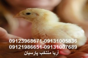 قیمت بالاجوجه موجب گرانی مرغ درعیدنمیشود خريد جوجه بوقلمون , فروش جوجه بوقلمون , خريد جوجه شترمرغ , فروش جوجه شترمرغ , خريد جوجه گوشتي , فروش جوجه گوشتي , خريد مرغ بومي , فروش مرغ بومي 09123968671 بوقلمون بيوتي , بوقلمون_گوشتي , بوقلمون گوشتي , خريد بوقلمون BUT6 , بوقلمون بومي , بوقلمون بيوتي , بوقلمون صنعتي , بوقلمون ارگانيك , بوقلمون سفيد , بوقلمون بيوتي 6 , بوقلمون بيوتي فوق سنگين , بوقلمون محلي شمال , خريد بوقلمون گوشتي در ورامين , فروش بوقلمون فرانسوي , فروش جوجه بوقلمون يكماهه در ورامين , بوقلمون بي يو تي در اروميه , قيمت جوجه بوقلمون بي يو تي , قيمت جوجه بوقلمون پانزده روزه , قيمت جوجه بوقلمون 15 روزه , حمل بوقلمون بيوتي زنده در ورامين , بوقلمون گوشتي در ورامين , خريد و فروش بوقلمون در ورامين, فروش بوقلمون گوشتي در ورامين , بوقلمون بيوتي 6 , خريدار جوجه بوقلمون but , جوجه يكماهه بوقلمون در ورامين , پرورش بوقلمون, جوجه بوقلمون , بوقلمون بيوتي 6 فوق سنگين, بوقلمون بيوتي 6 , قيمت جوجه بوقلمون بي يو تي , پرورش بوقلمون , جوجه بوقلمون, بوقلمون برنز , بوقلمون برنز آمريكايي , بوقلمون برنز انگليسي , بوقلمون برنز انگليس , بوقلمون برنز آمريكا , بوقلمون برنز كانادا , بوقلمون برنز ماسوله , بوقلمون برنز انگليس يكماهه , بوقلمون برنز فرانسوي , بوقلمون برنزآمريكا , بوقلمون برنز انگليسي 35 روزه , بوقلمون برنزه , بوقلمون برنز , مرغ , مرغ بومي , مرغ بومي گلپايگاني , مرغ بومي تخمگذار , تخمگذار , مرغ تخمگذار , جوجه مرغ بومي , جوجه تخمگذار بومي , مرغ بومي 5 ماهه , مرغ 5 ماهه , مرغ 5 ماهه بومي گلپايگان , مرغ بومي گلپايگان اصل , مرغ لوهمن قهوه , مرغ لومهن , مرغ بومي بلك , مرغ بومي گوشتي , مرغ بومي گلپايگاني , مرغ ال اس اس, مرغ پولت , نيمچه مرغ بومي , مرغ بومي محلي , بلدرچين , بلك استار , پليموت راك , مرغ بومي بلك , مرغ بومي بلك استار , مرغ بلك استار , مرغ , مرغ بومي تخمگذار , مرغ بومي محلي , نيمچه مرغ , نيمچه , نيمچه دو ماهه بلك , مرغ لوهمن قهوه , مرغ لوهمن , مرغ لوهمن دم طلايي , شترمرغ , شترمرغ پرواري , شترمرغ هچري يكماهه دوماهه , شترمرغ مولد , شترمرغ پرواري , شترمرغ استراليايي , شترمرغ ايران , شترمرغ آفريقايي , شترمرغ تربت حيدريه , شترمرغ اصفهان , شترمرغ يكماهه , شترمرغ روغن , روغن