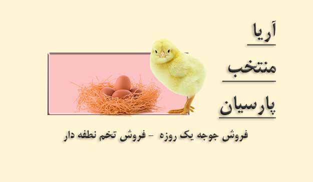 فروش تخم مرغ نطفه دار - فروش جوجه یک روزه - فروش مرغ تخمگذار - فروش مرغ بومی - فروش مرغ گوشتی