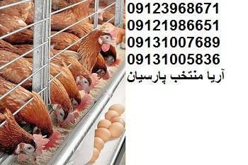 صادرات۳۲هزارتن محصول دام وطیورازاستان اصفهان09123968671