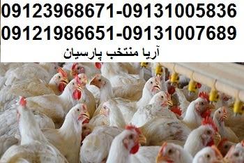 زیان1100میلیاردتومانی مرغداران درماههای اخیر09123968671