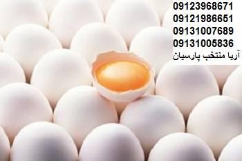 فروش تخم مرغ صادراتي