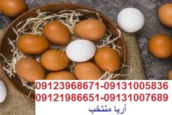فروش جوجه09123968671