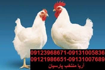 میزان تولیدمرغ درکشوربسیاربیشترازتقاضای بازاراست09123968671