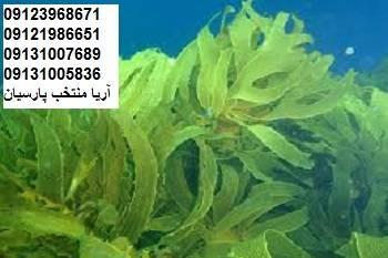 جلبک دریایی،برای کیفیت،گوشت،تخم مرغ