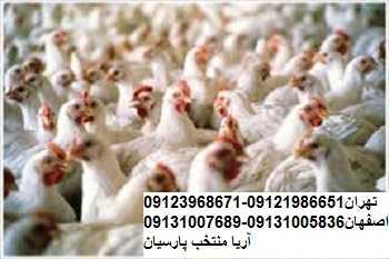 مصرف هورمون درمرغداریها گوشتي شایعه است خريد جوجه بوقلمون , فروش جوجه بوقلمون , خريد جوجه شترمرغ , فروش جوجه شترمرغ , خريد جوجه گوشتي , فروش جوجه گوشتي , خريد مرغ بومي , فروش مرغ بومي بوقلمون بيوتي , بوقلمون_گوشتي , بوقلمون گوشتي , خريد بوقلمون BUT6 , بوقلمون بومي , بوقلمون بيوتي , بوقلمون صنعتي , بوقلمون ارگانيك , بوقلمون سفيد , بوقلمون بيوتي 6 , بوقلمون بيوتي فوق سنگين , بوقلمون محلي شمال , خريد بوقلمون گوشتي در ورامين , فروش بوقلمون فرانسوي , فروش جوجه بوقلمون يكماهه در ورامين , بوقلمون بي يو تي در اروميه , قيمت جوجه بوقلمون بي يو تي , قيمت جوجه بوقلمون پانزده روزه , قيمت جوجه بوقلمون 15 روزه , حمل بوقلمون بيوتي زنده در ورامين , بوقلمون گوشتي در ورامين , خريد و فروش بوقلمون در ورامين, فروش بوقلمون گوشتي در ورامين , بوقلمون بيوتي 6 , خريدار جوجه بوقلمون but , جوجه يكماهه بوقلمون در ورامين , پرورش بوقلمون, جوجه بوقلمون , بوقلمون بيوتي 6 فوق سنگين, بوقلمون بيوتي 6 , قيمت جوجه بوقلمون بي يو تي , پرورش بوقلمون , جوجه بوقلمون, بوقلمون برنز , بوقلمون برنز آمريكايي , بوقلمون برنز انگليسي , بوقلمون برنز انگليس , بوقلمون برنز آمريكا , بوقلمون برنز كانادا , بوقلمون برنز ماسوله , بوقلمون برنز انگليس يكماهه , بوقلمون برنز فرانسوي , بوقلمون برنزآمريكا , بوقلمون برنز انگليسي 35 روزه , بوقلمون برنزه , بوقلمون برنز , مرغ , مرغ بومي , مرغ بومي گلپايگاني , مرغ بومي تخمگذار , تخمگذار , مرغ تخمگذار , جوجه مرغ بومي , جوجه تخمگذار بومي , مرغ بومي 5 ماهه , مرغ 5 ماهه , مرغ 5 ماهه بومي گلپايگان , مرغ بومي گلپايگان اصل , مرغ لوهمن قهوه , مرغ لومهن , مرغ بومي بلك , مرغ بومي گوشتي , مرغ بومي گلپايگاني , مرغ ال اس اس, مرغ پولت , نيمچه مرغ بومي , مرغ بومي محلي , بلدرچين , بلك استار , پليموت راك , مرغ بومي بلك , مرغ بومي بلك استار , مرغ بلك استار , مرغ , مرغ بومي تخمگذار , مرغ بومي محلي , نيمچه مرغ , نيمچه , نيمچه دو ماهه بلك , مرغ لوهمن قهوه , مرغ لوهمن , مرغ لوهمن دم طلايي , شترمرغ , شترمرغ پرواري , شترمرغ هچري يكماهه دوماهه , شترمرغ مولد , شترمرغ پرواري , شترمرغ استراليايي , شترمرغ ايران , شترمرغ آفريقايي , شترمرغ تربت حيدريه , شترمرغ اصفهان , شترمرغ يكماهه , شترمرغ روغن , روغن شترمرغ , شتر