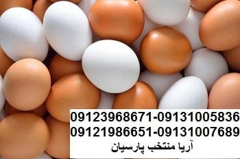آخرین وضعیت بازار تخم مرغ09123968671